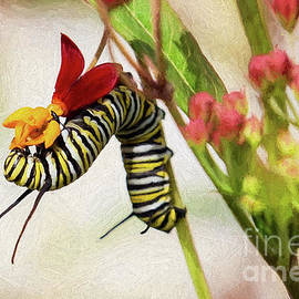 Monarch Butterfly Caterpillar Eating Tropical Milkweed by Sharon McConnell