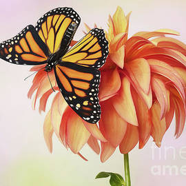 Monarch Butterfly Shows off on Dahlia by Linda D Lester