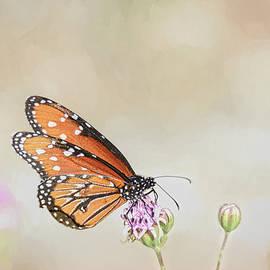 Monarch Butterfly Simplicity by Debra Martz