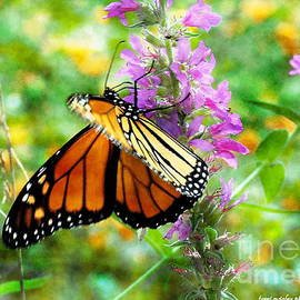 Monarch In Motion by Tami Quigley