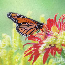 Monarch Kiss by Sharon McConnell