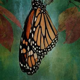 Monarch Majesty by Jill Love