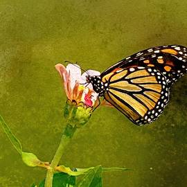 Monarch with  Grunge Effect by Carmen Macuga
