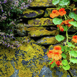 Monhegan Island Stone Wall.  Maine by Dave Cleaveland
