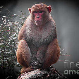 Monkey in the cold by Pravine Chester
