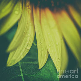 Moody Sunflower -square by Scott Pellegrin