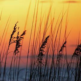 Moody Sunset by Mary Ann Artz