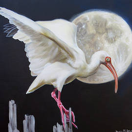 Moon Over Mississippi An Ibis Perspective by Phyllis Beiser