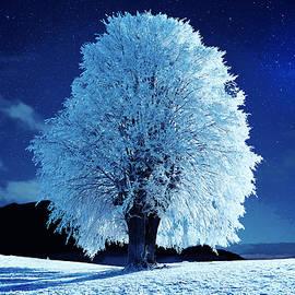 Moonlit Winter Night by Alex Mir