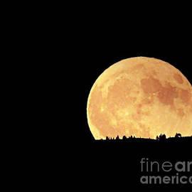 Moonrise by Deni Kidwell