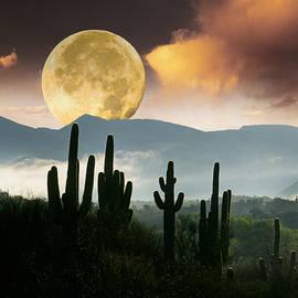 Moonset over Saguaro Cactus