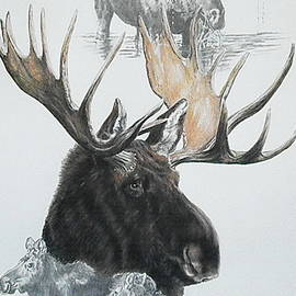Moose Collage by Barbara Keith