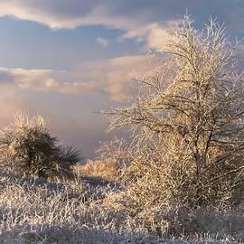 Morning After by David Beard