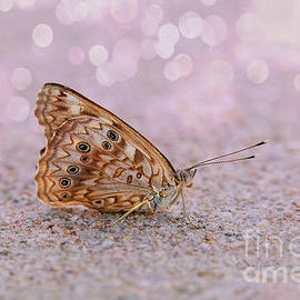 Morning Butterfly Bokeh by Sharon McConnell