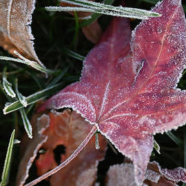 Morning Frost by Bill Tincher
