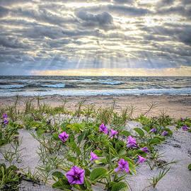 Morning Glories at Sunrise by Debra and Dave Vanderlaan