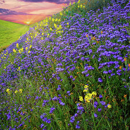 Morning Glory on the Carrizo by Lynn Bauer