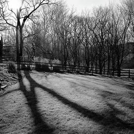 Morning Light Black and White by Karen Adams