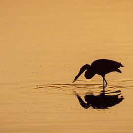 Morning Mirror by Jurgen Lorenzen