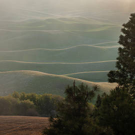 Morning Mist Steptoe Butte by Mary Lee Dereske