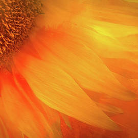 Morning Sunflower by Terry Davis