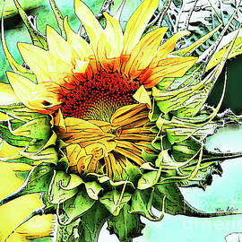 Morning Sunflower by Tina LeCour