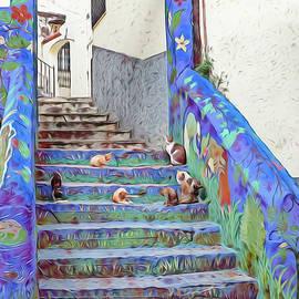 Morocco Blue Cat Culture by Rebecca Herranen