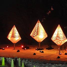 Morton Arboretum Holiday Trees by Barbara Ebeling
