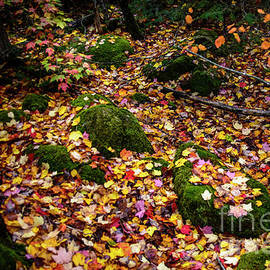 Moss and Leaves by Alana Ranney