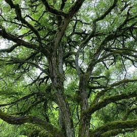 Moss Covered Twisted Tree Branches by Jerry Abbott