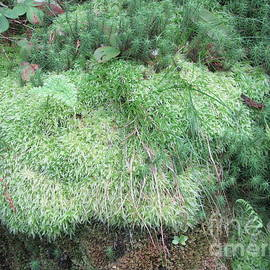 Moss On A Rock by Lesley Evered