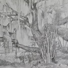 Mossy Florida tree by Cathy Vinson