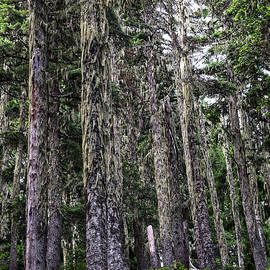 Mossy Forest by Dana Hardy