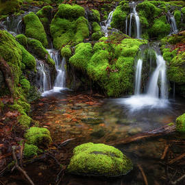 Mossy Spring Waterfall 2021 square by Bill Wakeley