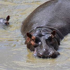 Mother and Baby Hippo by Marta Kazmierska