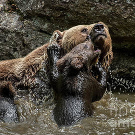 Mother Bear with Cubs in Pond by Arterra Picture Library