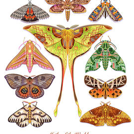 Moths of the World Print by Tim Phelps