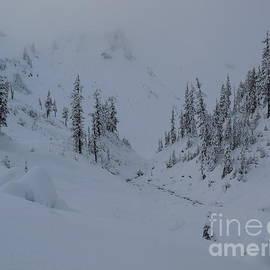 Winter, Bagley Creek Loop Trail, Mount Baker Art Print by Art Sandi