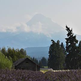 Mount Hood Behind Fields of Lavender by Riley Bradford