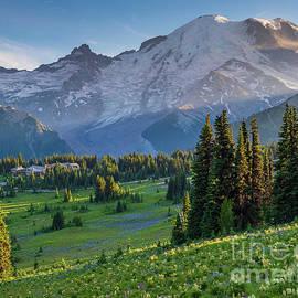 Mount Rainier Dusk Meadows by Mike Reid