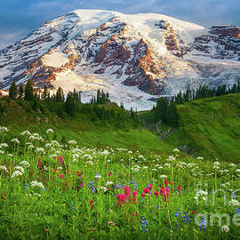 Mount Rainier Flower Meadow by Inge Johnsson