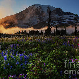 Mount Rainier Photography Summer Layers of Flowers and Mist by Mike Reid