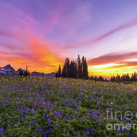 Mount Rainier Tatoosh Range Meadows Sunset by Mike Reid
