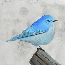 Mountain Bluebird #2 by Brady Nielson