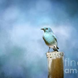 Mountain Bluebird of Happiness by Susan Warren