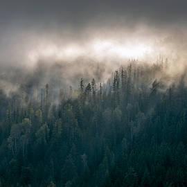 Mountain Light by Joy McAdams