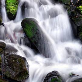 Mountain Spring Stream by Douglas Taylor