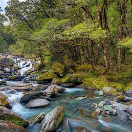 Mountain Stream in New Zealand by Alexey Stiop