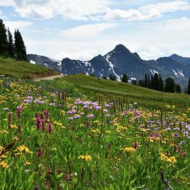 Mountain Wildflowers by Sheryl Macklin