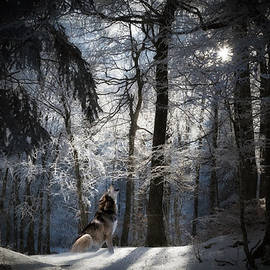 Mountainous Nighttime Snow Scene With Wolf by Sandi OReilly